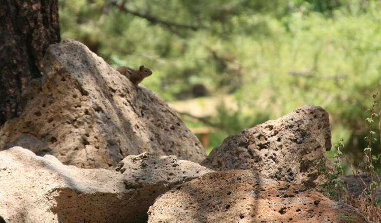 Squirrel on trail - Arizona Hiking