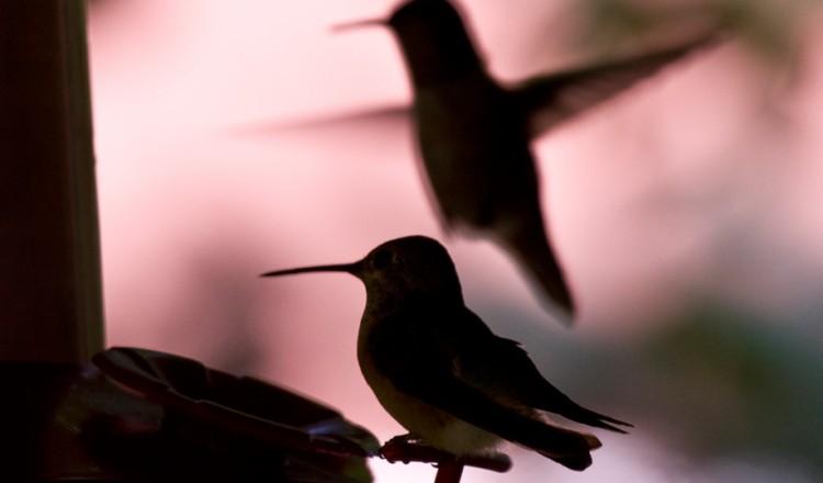 Birdlife Hummingbird