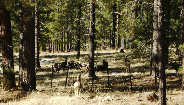 Wildlife Viewing - Greer, Arizona
