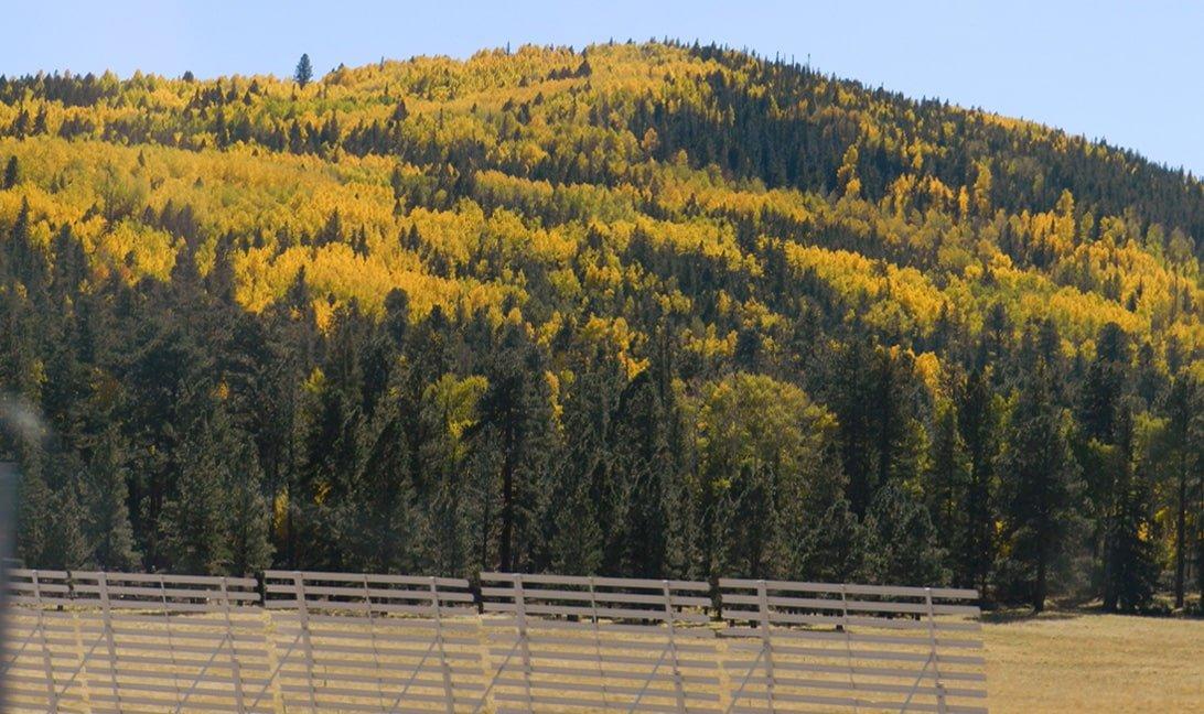 Beautiful Fall Colors in Greer