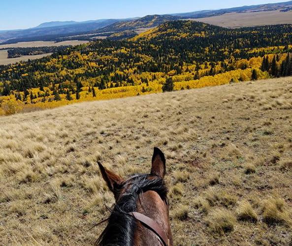 Horseback Riding in Greer