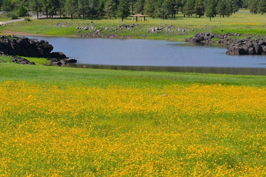 Spring flowers bloom at Greer Lakes